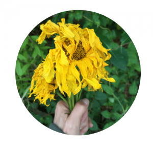 chakra-solaire-jaune